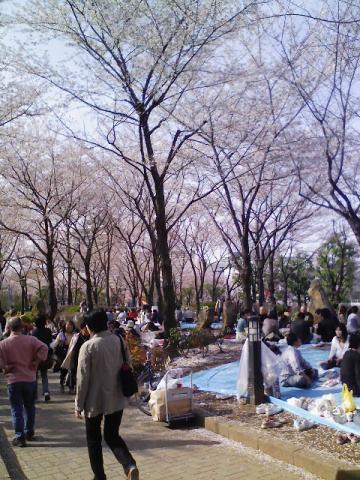 川口市西公園の桜