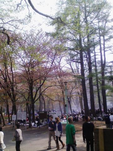札幌の円山公園の花見